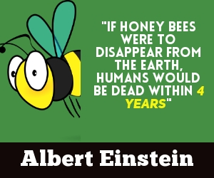 Bees - Albert Einstein Quote
